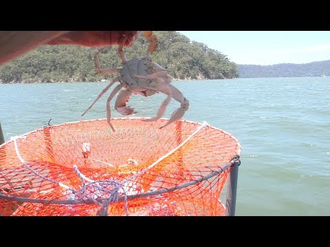 Rigging a crab trap and catching crabs.