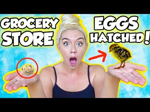 I HATCHED AN EGG FROM THE GROCERY STORE! SO SHOCKING AND AMAZING