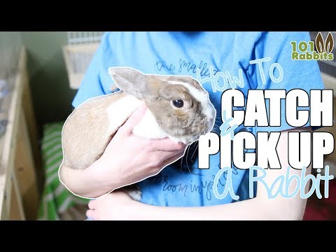 How To Catch and Pick Up a Rabbit