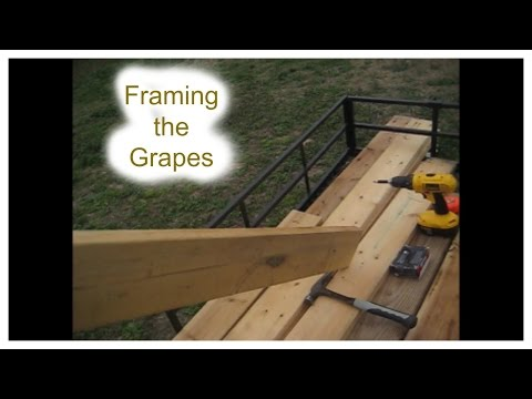 Cleaning up the grape vines - Part 1