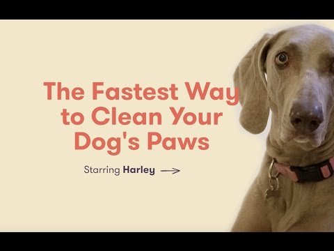 The Fastest Way To Clean Your Dog's Paws
