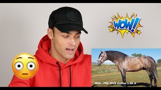 REACTING TO MY STALLIONS FOR SALE VIDEO