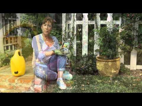 How to Naturally Acidify Soil : Garden Space
