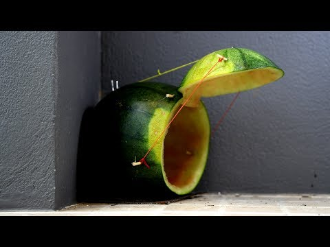 Make a Mouse Trap using Watermelon - Funny DIY