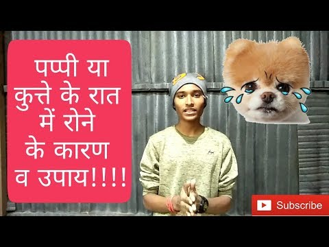 How to deal with puppy crying (Hindi) | Why small puppies cry ???