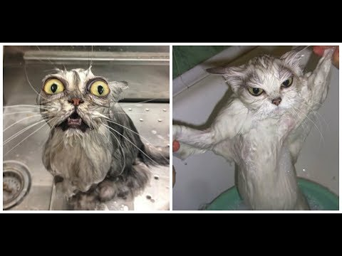 Wet Cats are Funny. Wet Basements Aren't | Roto-Rooter