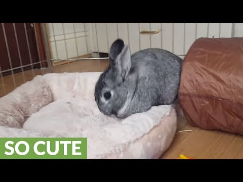 Bunny furious with owner for making bed messy