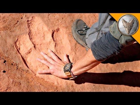 Hunting for Dinosaur Tracks!
