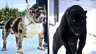 """5 سلالات الكلاب تبدو كأنها من تربية الشيطان.. """"شكلها غريب ولا يصدق"""""""