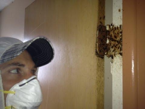 Exterminating German Roaches Tampa Fl