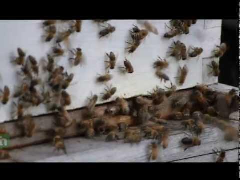 Honey bees & charity
