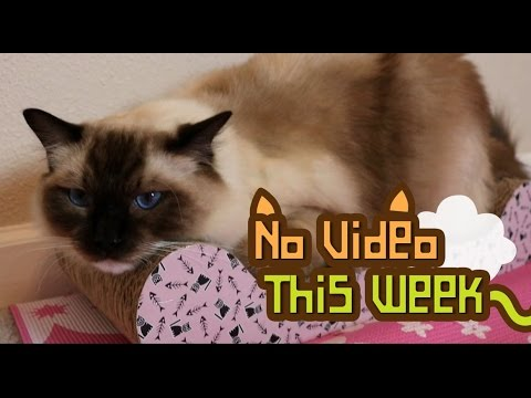 No Video This Week.