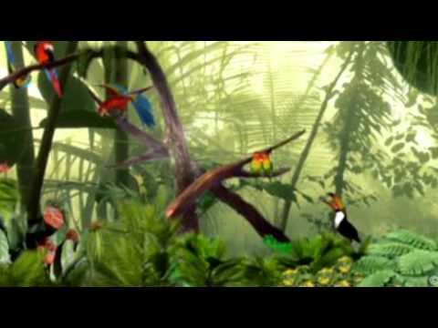 Birds Chirping And Singing In The Forest   Sound Effect 5