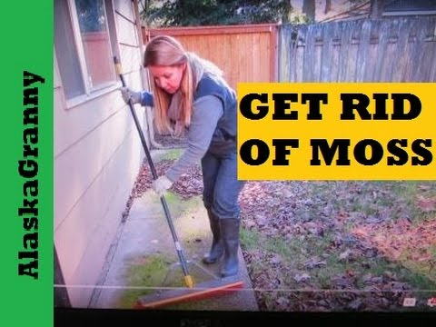 How To Get Rid Of Moss On Walkways, Driveways, Roofs, and Fences