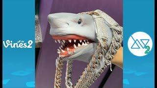 New Shark Puppet Instagram Videos Compilation February 2020 | Best Shark Puppet videos (W/Tittles)
