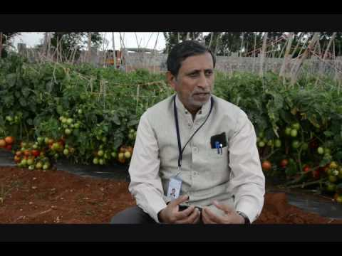 Interview by Dr.M.R.Dinesh, Director, ICAR-IIHR