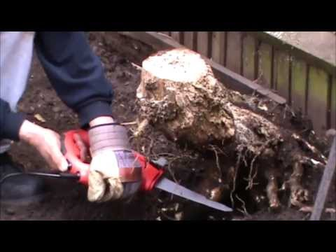 REMOVE TREE TRUNKS IN THE GARDEN