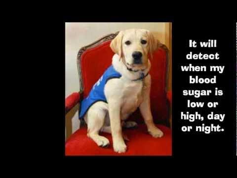 Aidans Wish for a Diabetic Alert Dog