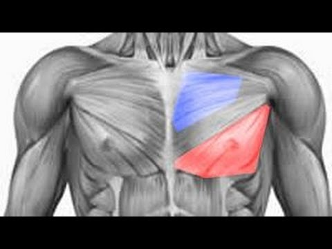 How To Build Your Inner Chest