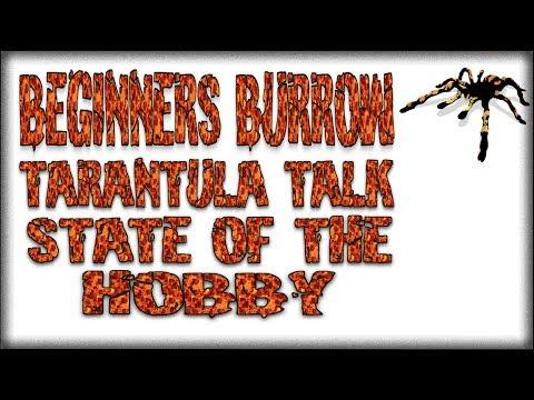 Tarantula Talk EP 2 - Beginners Burrow