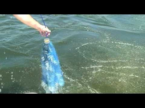 How To Use A Casting Net To Catch Live Bait