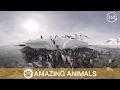 Download           360 Penguins in Antarctica MP3,3GP,MP4