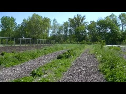 Living YEAR ROUND SOIL, Back to Eden Gardening Method with Wood Chips Mulch NO Till.