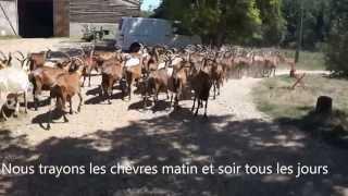 Fabrication fromages de chèvre fermiers Fromagerie stjaume