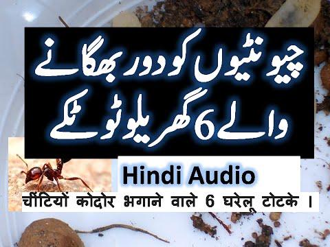 How to Get Rid of Ants in your House (Hindi Urdu Video)| Urdu| چونٹیوں کو بھگانے کے انوکھے طریقے