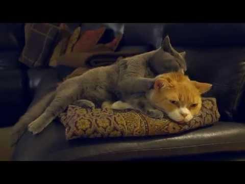 Roofie Cat getting a Little B tongue bath.