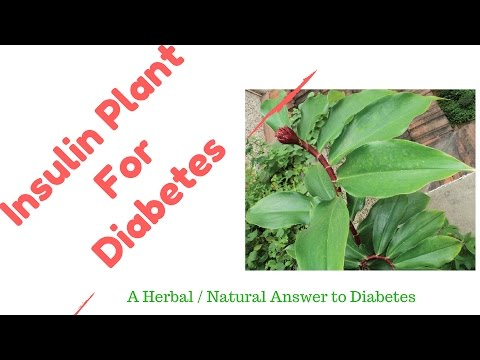 Insulin Plant   A Diabetes Home  Natural  Herbal Remedy || Magic Cure for Diabetes Naturally