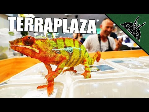 RAW EXPO EXPERIENCE - Terraplaza + new additions