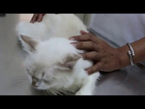 A beloved cat had rashes around the neck and ears Pt 1