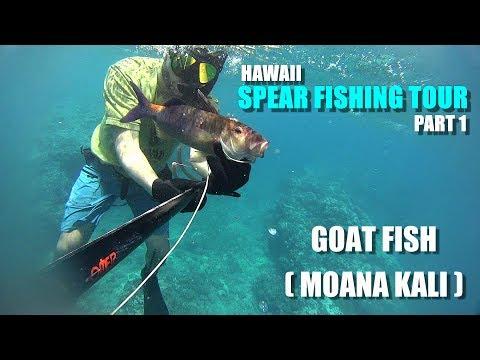 Spearfishing Tour Hawaii - Part 1 - Back Side of Maui Island