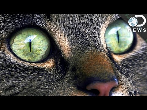 Why Does Your Cat Have Strange Eyes?