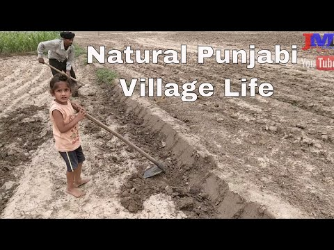 Learn Farm karanveer Learn Farming Agriculture Natural Punjabi Village Life