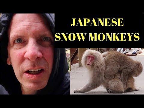 A day in Jigokudani Monkey Park