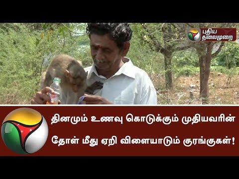 தினமும் உணவு கொடுக்கும் முதியவரின் தோள் மீது ஏறி விளையாடும் குரங்குகள்! #Monkey #Food