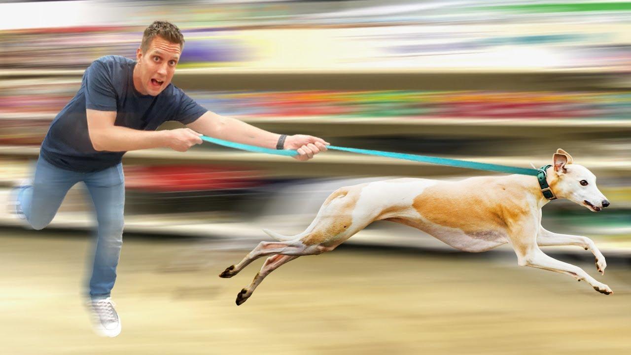 Buying Worlds Fastest Dog EVERYTHING she touches!