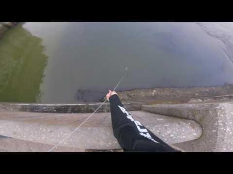 World record bowfishing shot
