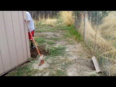 How to Get rid of Skunks from Under a Shed