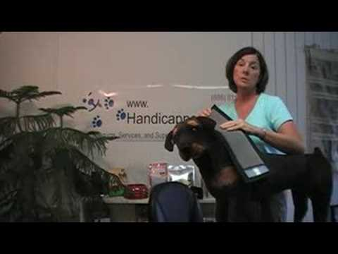 The No Bite Collar on a Dog - How to Measure and Use