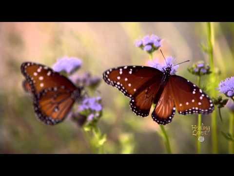 Healing Moment: Butterflies