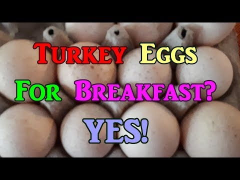 Turkey Eggs For Breakfast