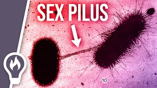 Why the sex pilus is so dangerous - horizontal gene transfer