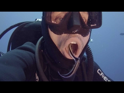 Cleaner Fish Swim Inside Divers Mouth