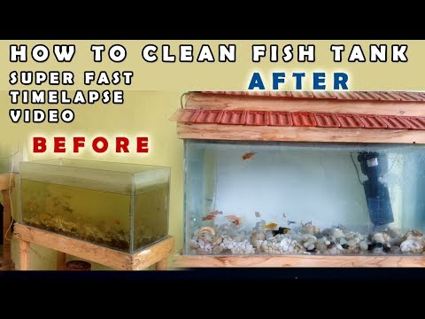 DIY- How to Clean a Fish Tank - Timelapse Video