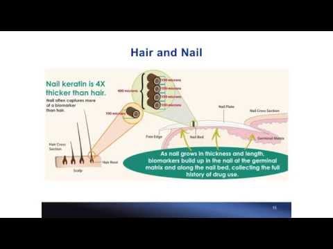 Methamphetamine and Amphetamine in Matching Nail and Hair Samples by Dr. Irene Shu
