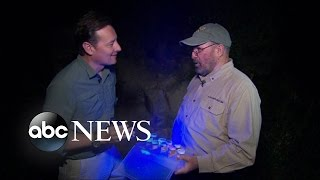 Download Hunting for Scorpions in Arizona Video