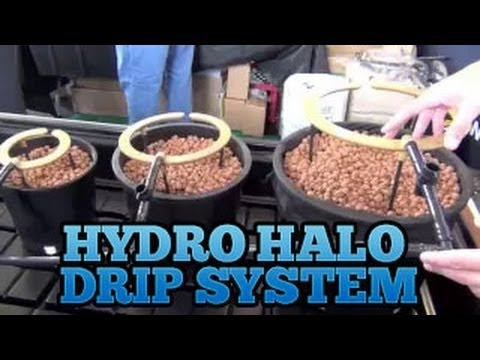 Hydro Halo Halo's - Grow Room Drip System Setup Best Easiest Drip Systems for Indoor Gardens